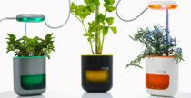 Pico, il vasetto hi-tech che coltiva le piante al posto tuo