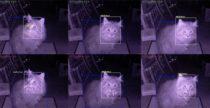 La gattaiola che ferma il gatto con la preda: mai più lucertole in casa