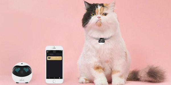Ebo Catpal, il compagno di giochi del tuo gatto è hi-tech