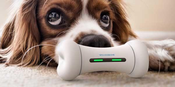 Wickedbone, l'osso interattivo per il tuo cucciolo