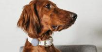 Collare DogTag con AirTag e sai sempre dove si trova il tuo pet